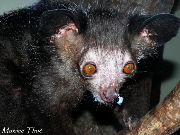 Картинки самые страшные животные, открыток