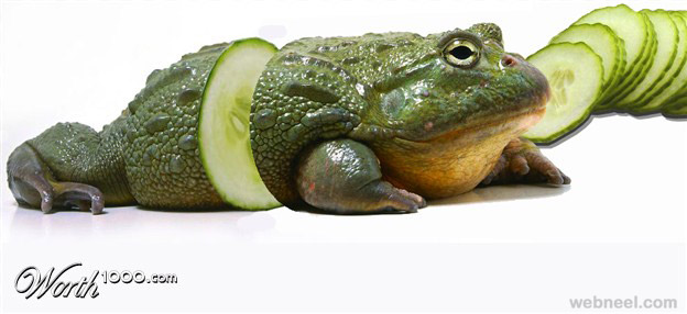 photo manipulation frog