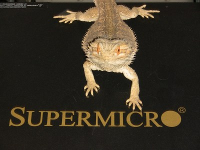Bearded dragon sitting on a SuperMicro switch