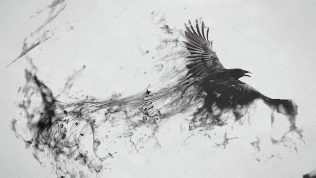 1920 × 1080 BirdAbstract Background