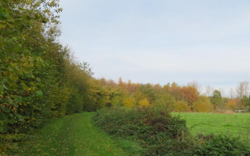 Natuurpunt Waasland loofbomen