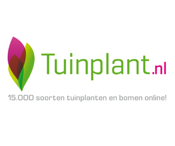 Bestel nu aardbeienplanten voor in de moestuin vanaf €1,81 via Tuinplant.nl