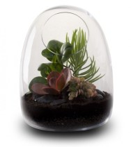 Terrarium-Ideas