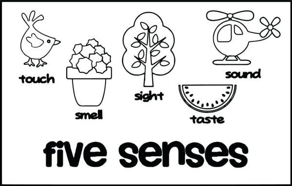 five senses coloring pages # 4