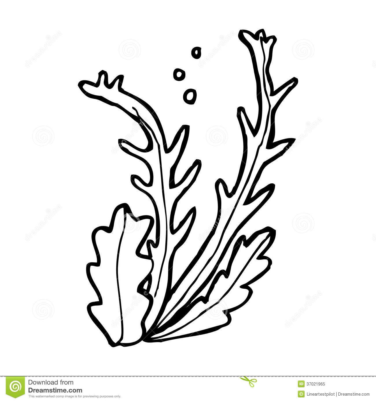 Algae Clipart Black And White Algae Black And White