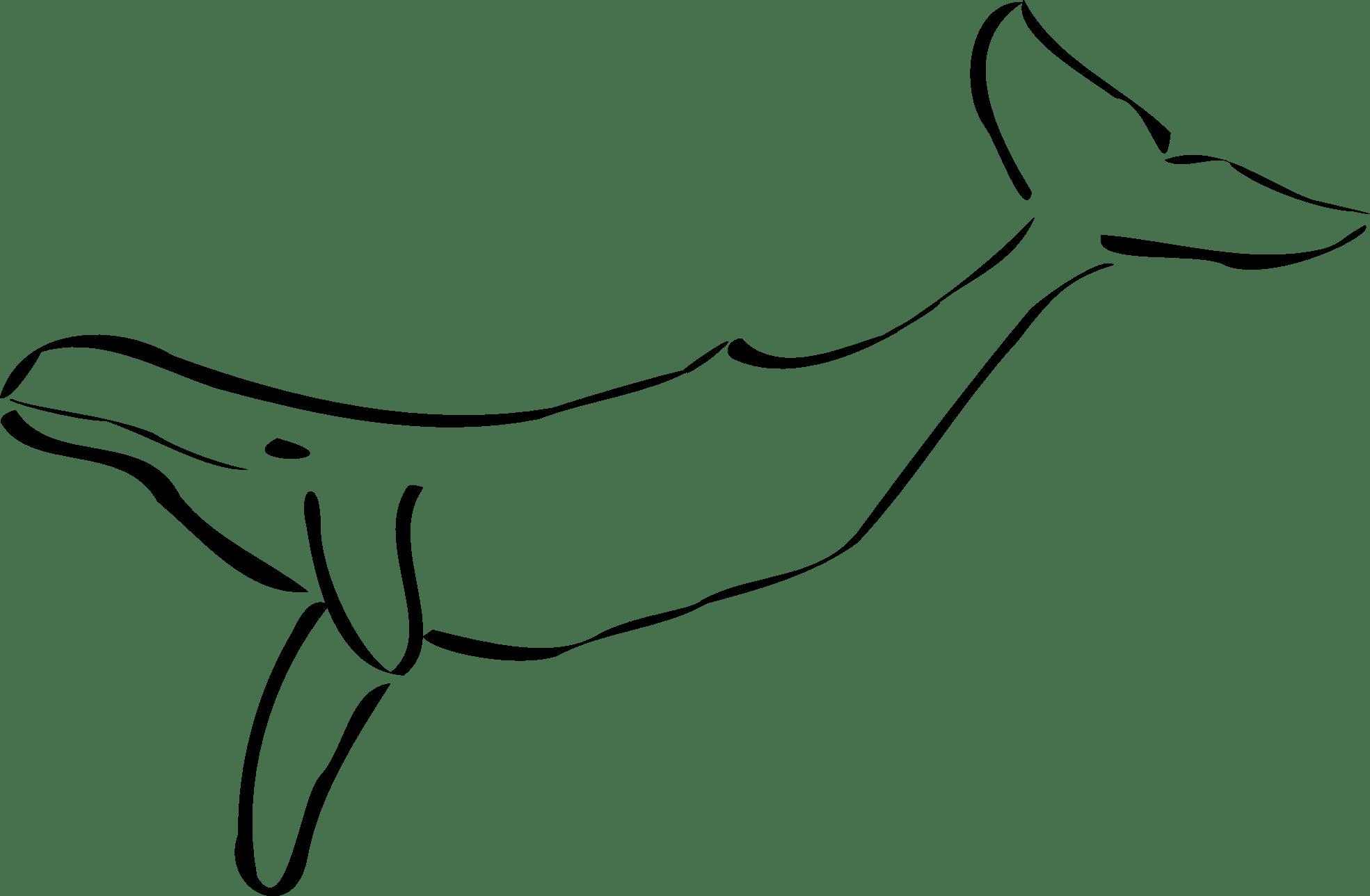 Clipart Whale Walrus Clipart Whale Walrus Transparent