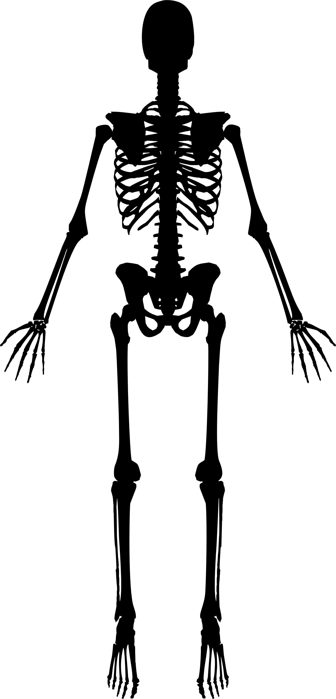 Clipart Skeleton Baby Skeleton Clipart Skeleton Baby