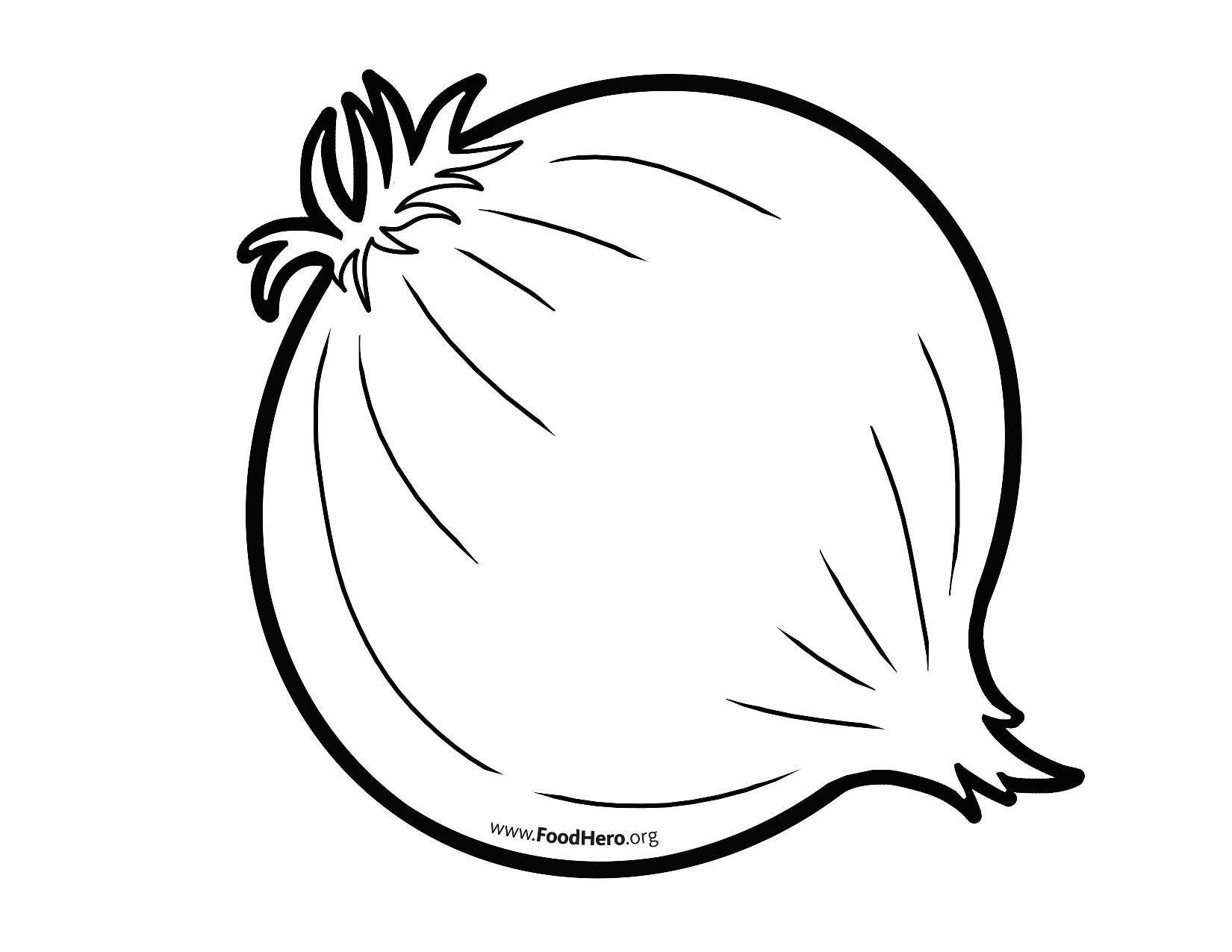 Onion Clipart Line Drawing Onion Line Drawing Transparent