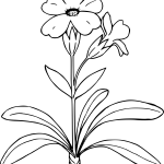 Plants Clipart Simple Plants Simple Transparent Free For Download On Webstockreview 2021
