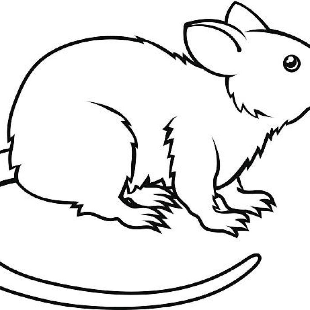 Rat Clipart Black And White Rat Black And White