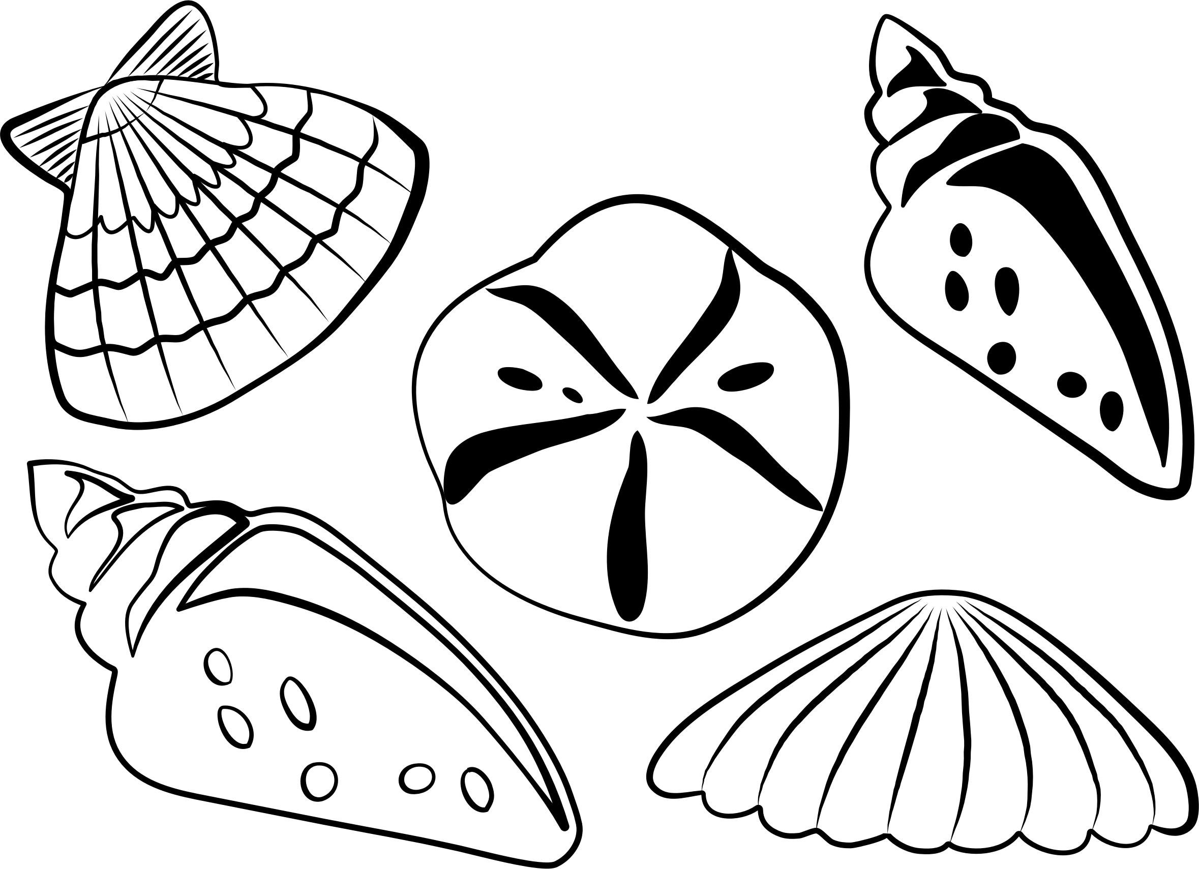 Seashells Clipart Outline Shell Seashells Outline Shell