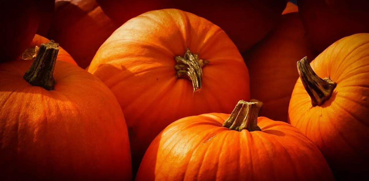 Benefits of Pumpkin, Eating Pumpkin Dessert During Pregnancy