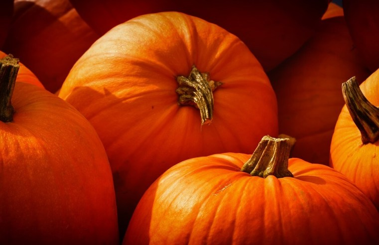 Benefits of Pumpkin, Eating Pumpkin Dessert During Pregnancy