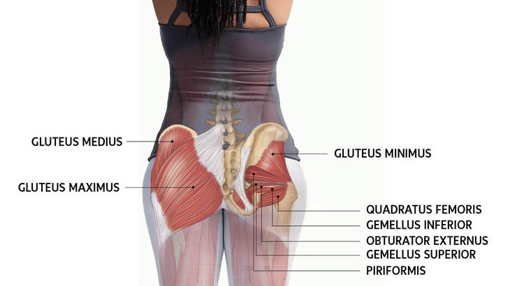 What is the glutes muscles?