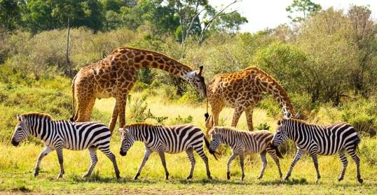 Why Wildlife?   UNWTO