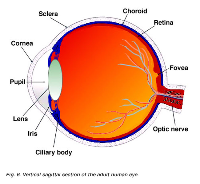 The Human Eye 8 Science 8 And 9