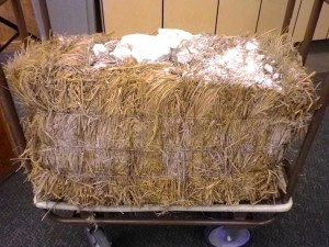 straw bale removed from 100 year old house