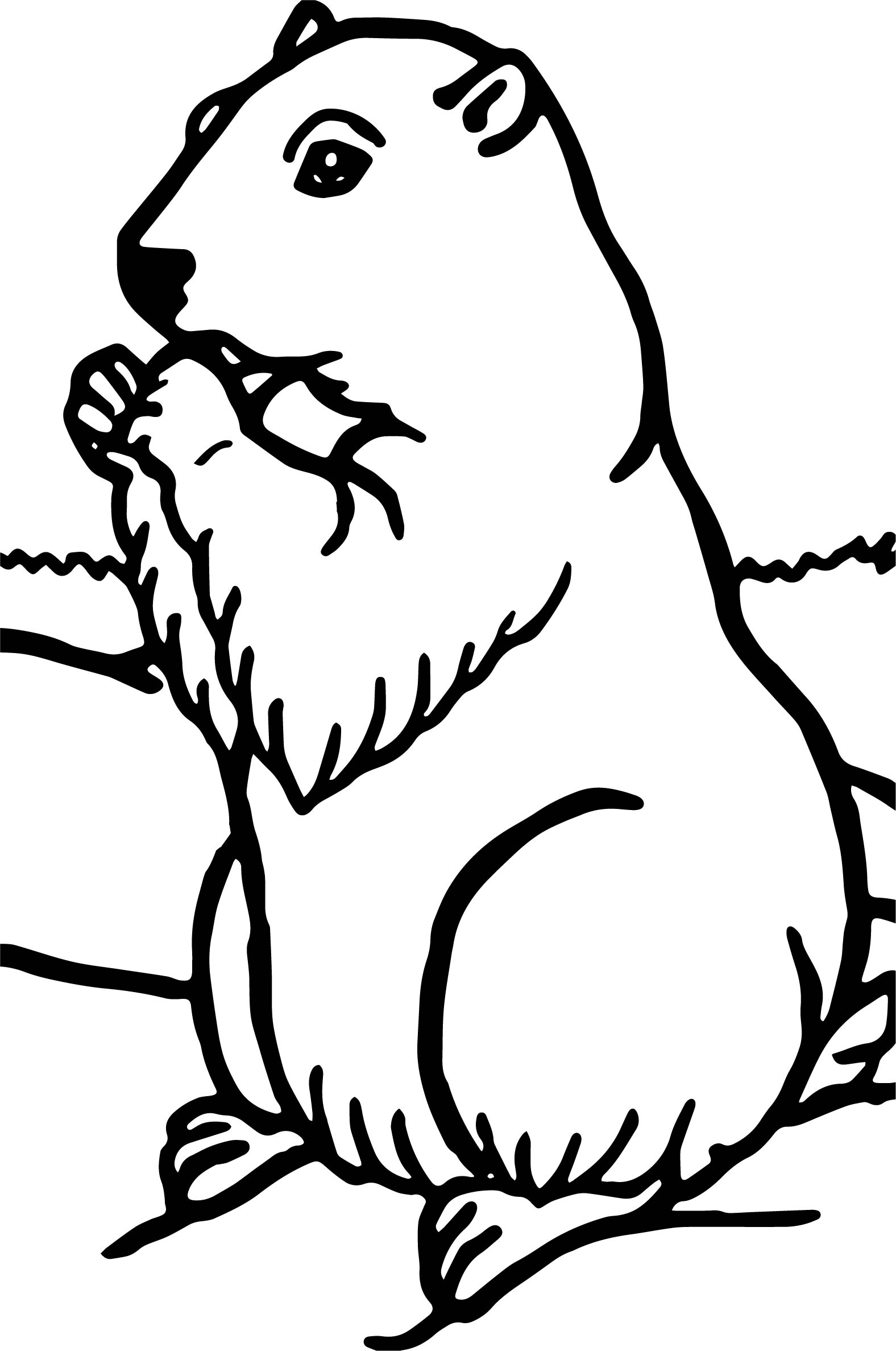 Groundhog Coloring Pages Sketch Coloring Page