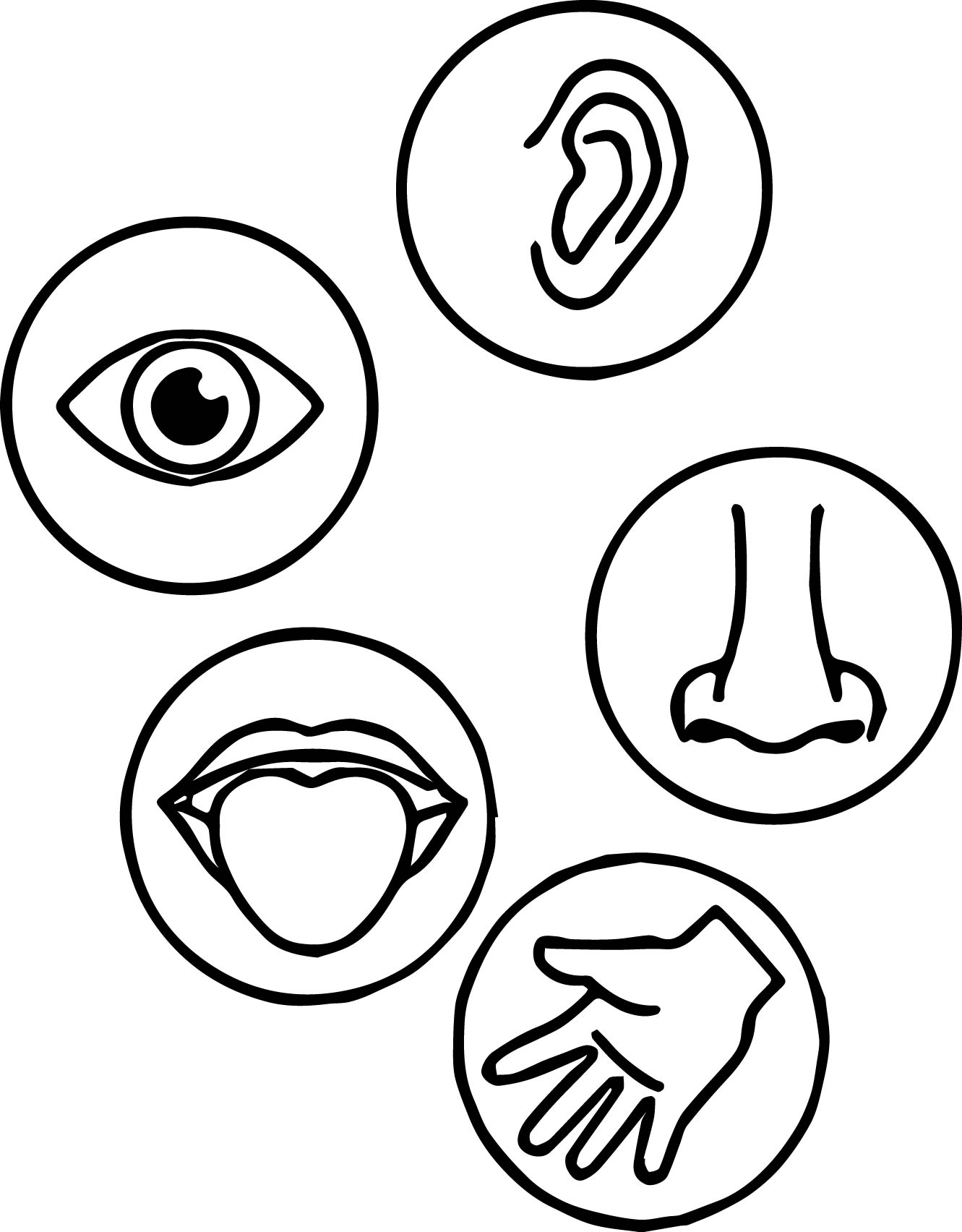 Sense Of Smell Coloring Page Coloring Pages