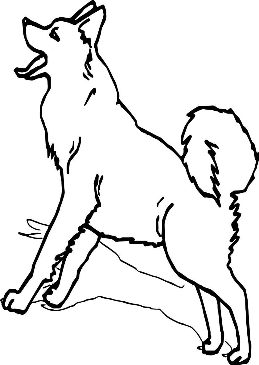 alaska siberian husky coloring page  wecoloringpage