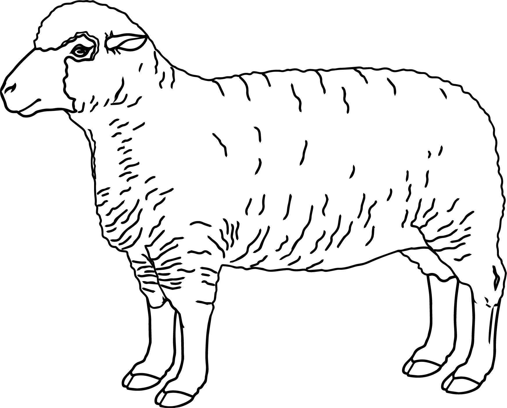 Realistic Sheep Coloring Page Wecoloringpage