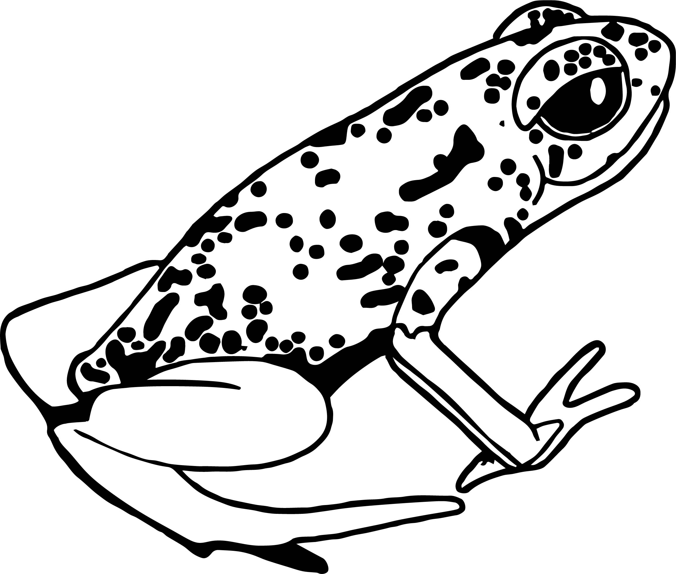 Rainforest Amphibian Coloring Page