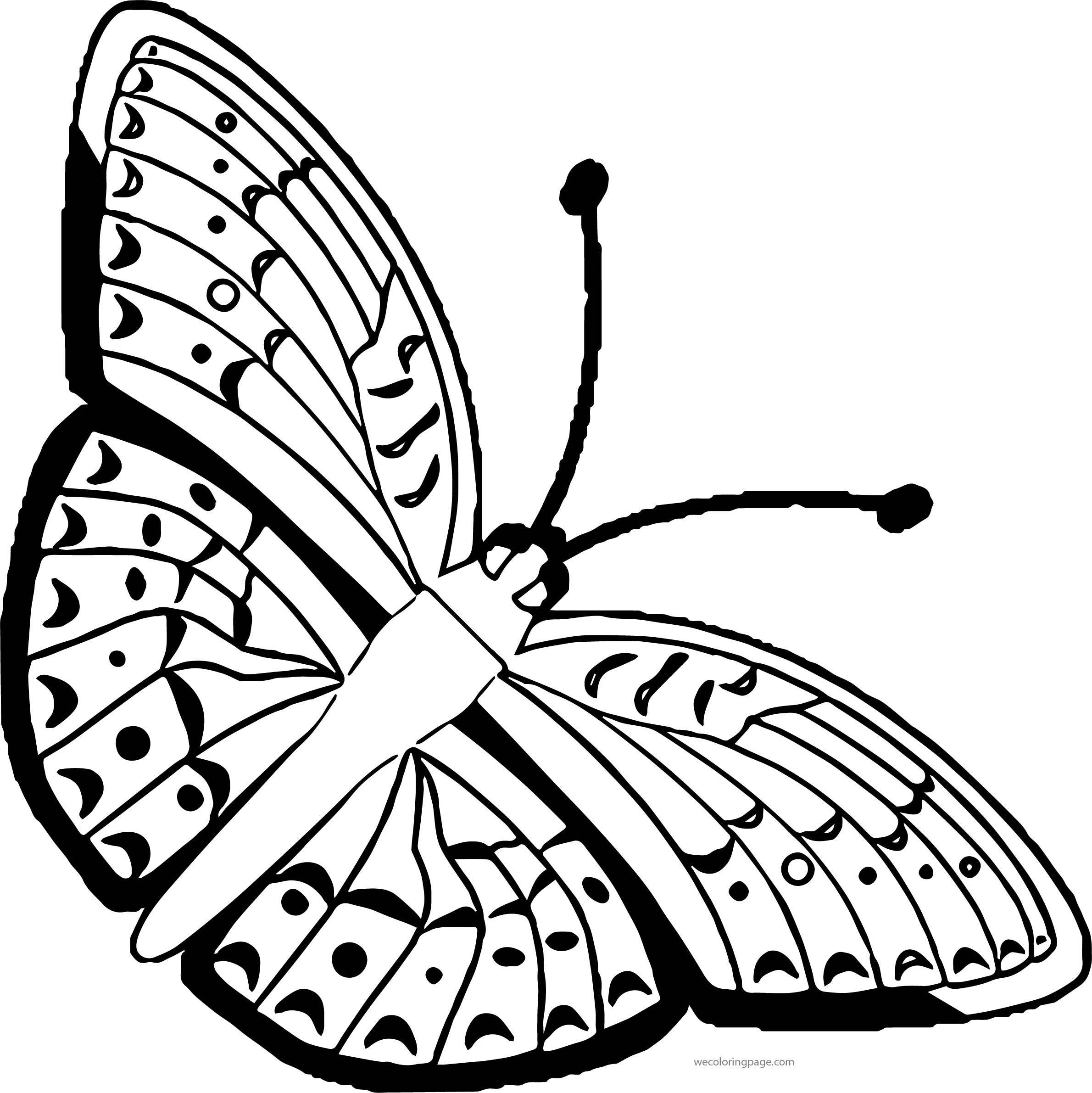 Free Butterfly Free Butterfly Clip Art Butterfly Medium Coloring Page