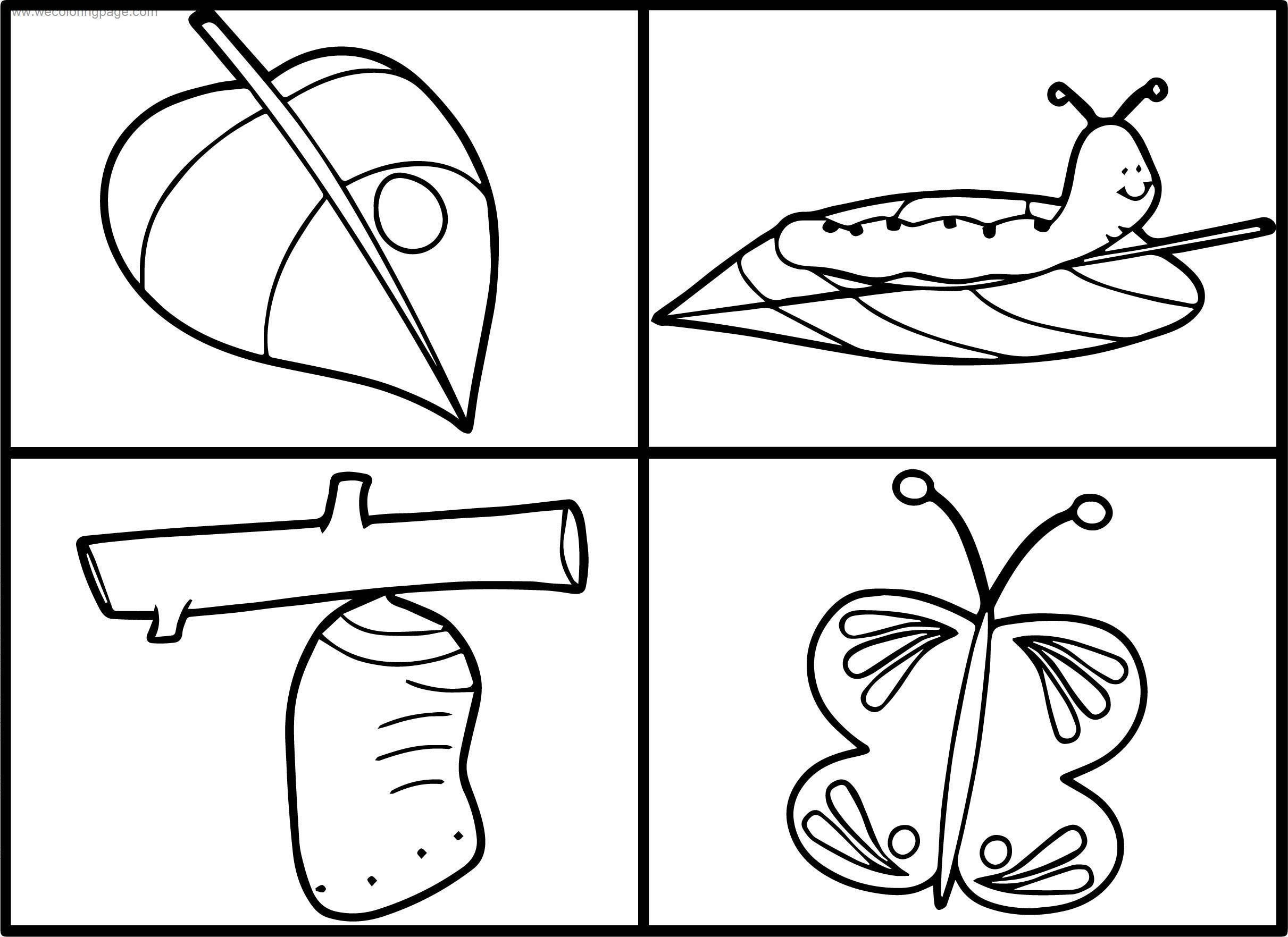 Butterfly Life Cycle Coloring Worksheets