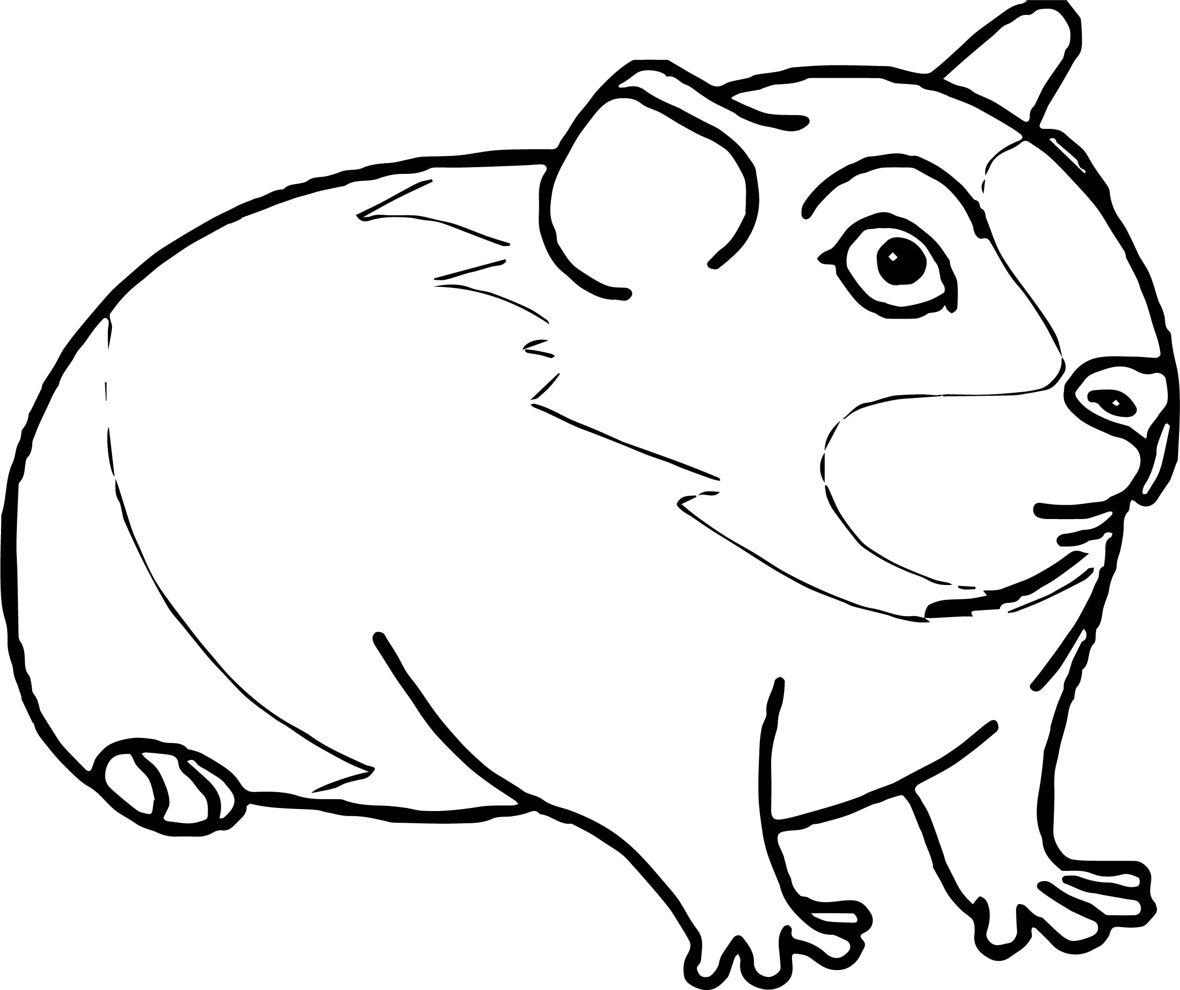 Guinea Pig Mouse Coloring Page