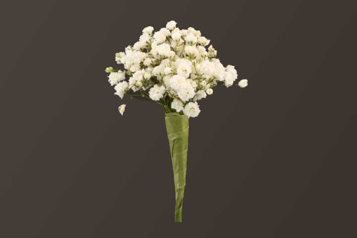 PICTURE OF BABY'S BREATH BOUTONNIERE