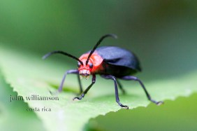 Nature Photography in Manuel Antonio Costa Rica - Bugs