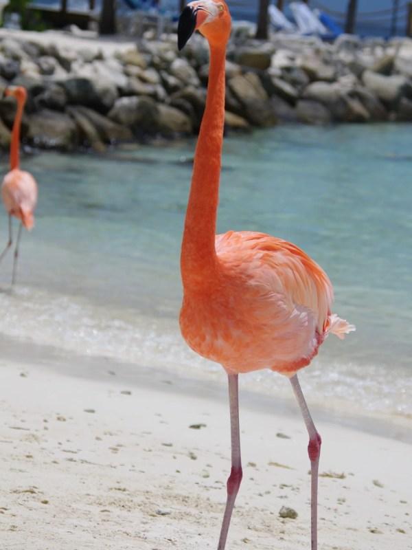 Win a luxury holiday to Aruba