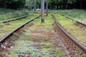 Nicht irgendwie bewachsen, sondern bewusst begrünt sind die Gleise in der Osloer Straße. Foto: D. Hensel