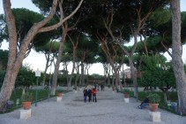 Beautiful trees on the Aventine Hill