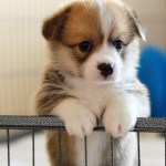 100 Cute Puppies And Their Afferent Breeds That Ensure A Melted Heart