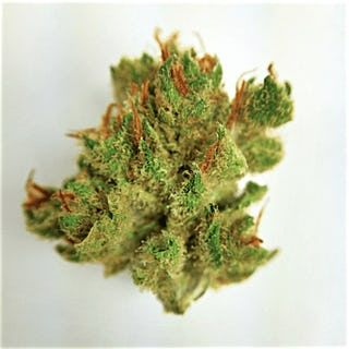 Cinex(Sativa Dominant Hybrid)