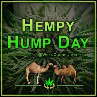 #Hempy #Humpday