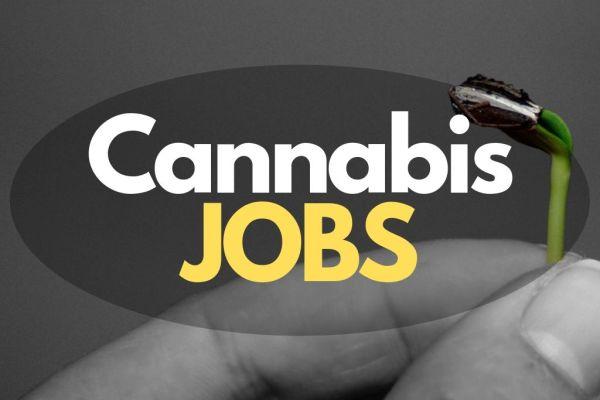 Jobs, die durch Cannabis Legalisierung entstehen würden