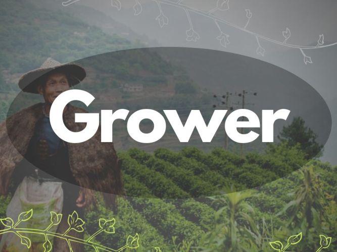 Cannabis Grower, Züchter, Anbauer