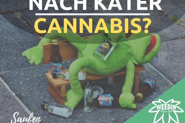 Cannabis CBD nach Alkohol Kater einnehmen kiffen gegen Kater Antikater J Nach dem saufen paffen?