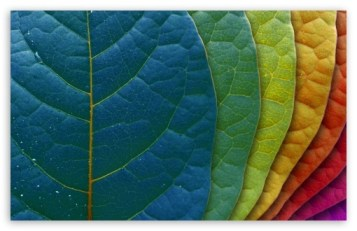 colorful_leaves-t2