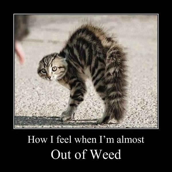 Suffering Crying Cat Meme Memes Mug Teepublic