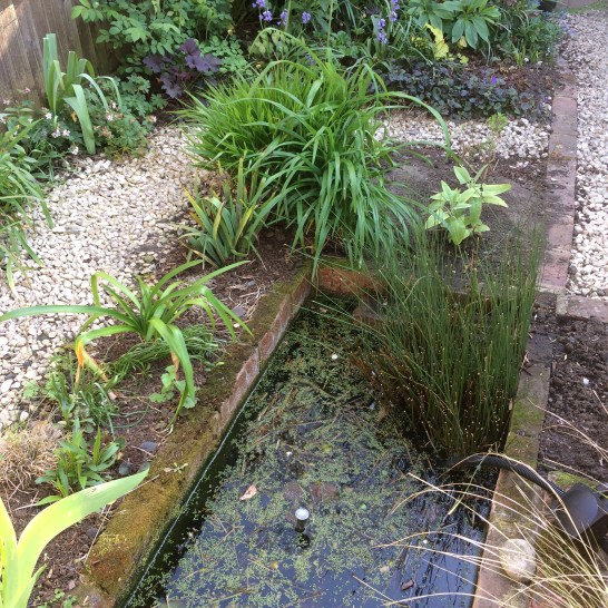 The pond and the Salvia Bed