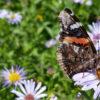 pollinator header