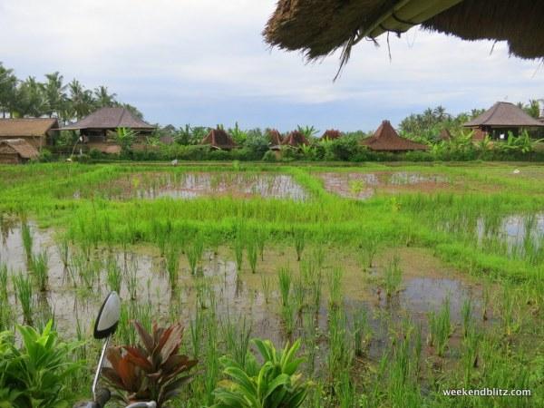 Rice paddies along the way