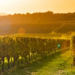Best wine regions in Europe