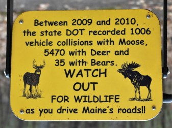 Maine Wildlife Park, Gray, Maine