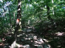 Lookout Trail