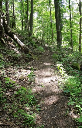 Wappinger Greenway Trail