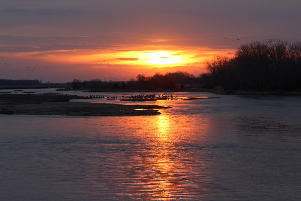 The sun rises behind a small flock of Sandhill Cranes in the Platte River